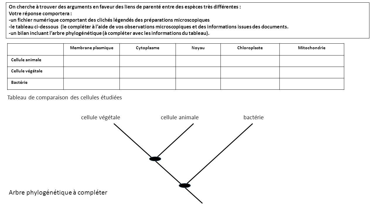 Arbre phylogénétique à compléter