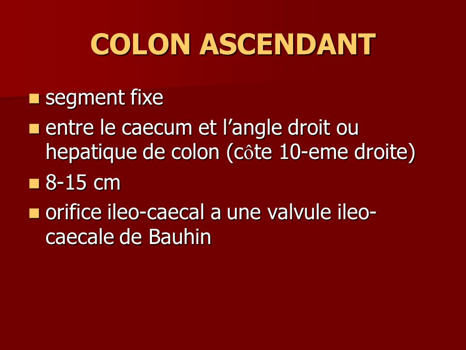 COLON ASCENDANT segment fixe