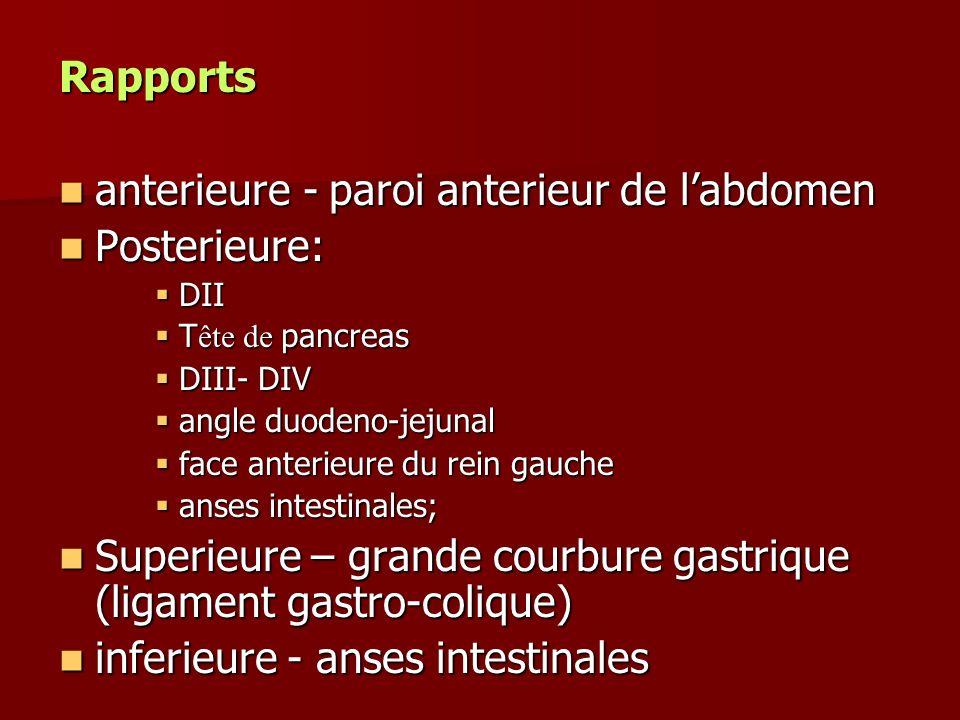 anterieure - paroi anterieur de l'abdomen Posterieure: