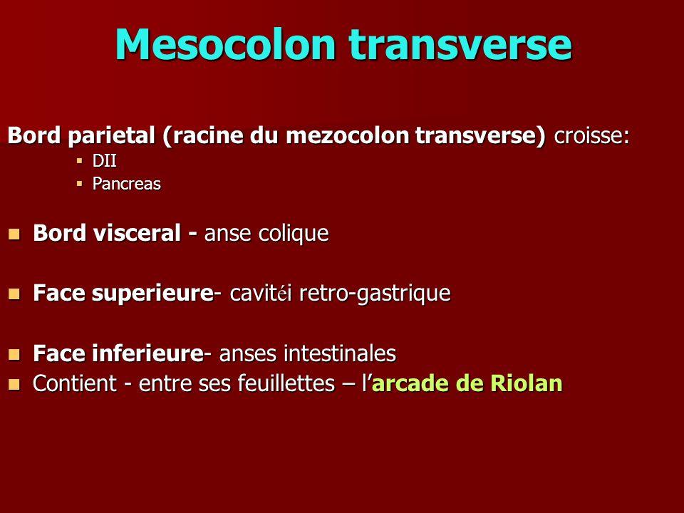 Mesocolon transverse Bord parietal (racine du mezocolon transverse) croisse: DII. Pancreas. Bord visceral - anse colique.