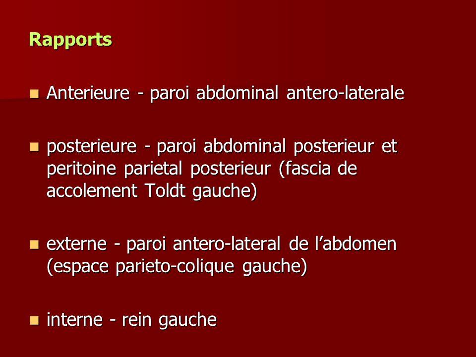 Rapports Anterieure - paroi abdominal antero-laterale.