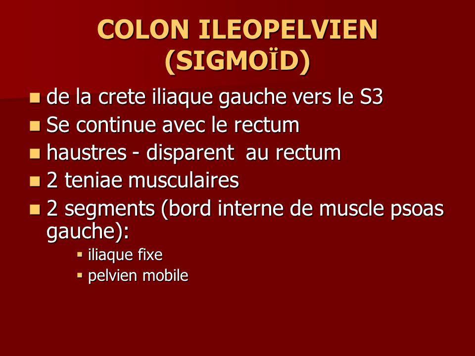 COLON ILEOPELVIEN (SIGMOÏD)