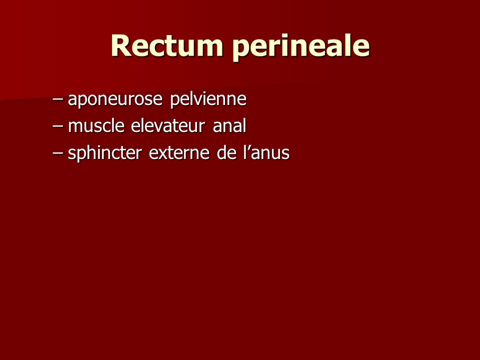 Rectum perineale aponeurose pelvienne muscle elevateur anal