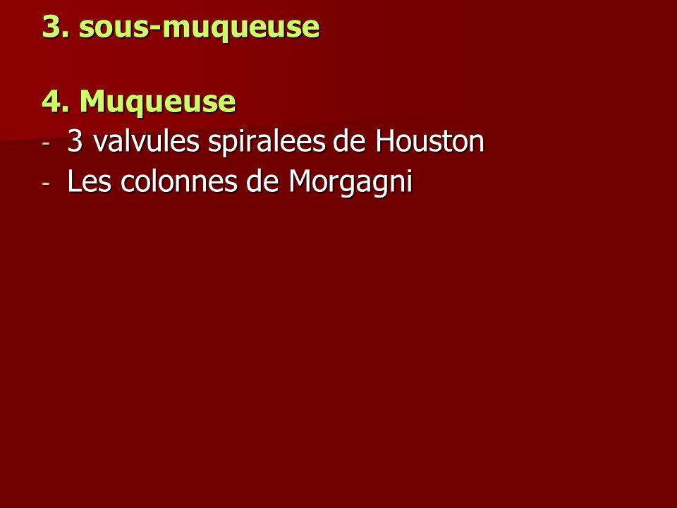 3. sous-muqueuse 4. Muqueuse 3 valvules spiralees de Houston Les colonnes de Morgagni