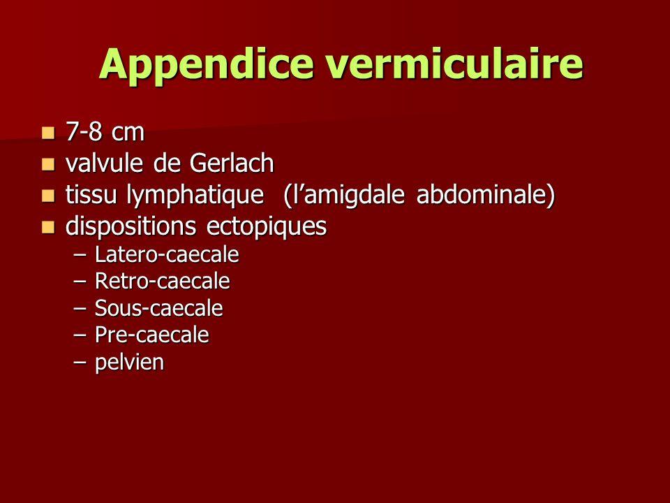 Appendice vermiculaire