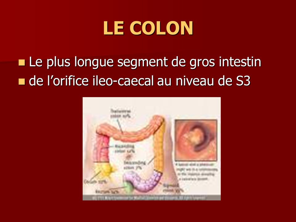 LE COLON Le plus longue segment de gros intestin