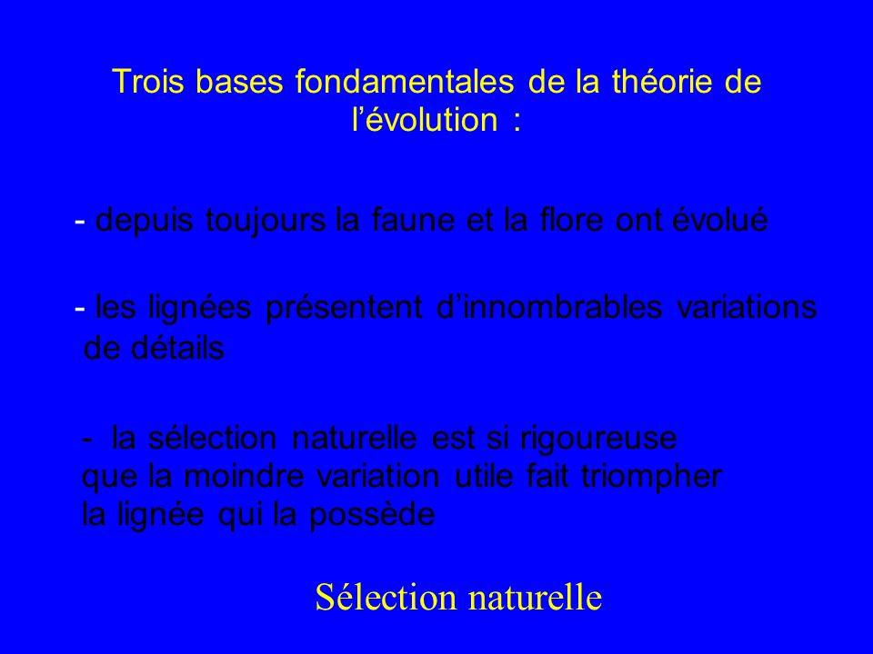 Trois bases fondamentales de la théorie de l'évolution :
