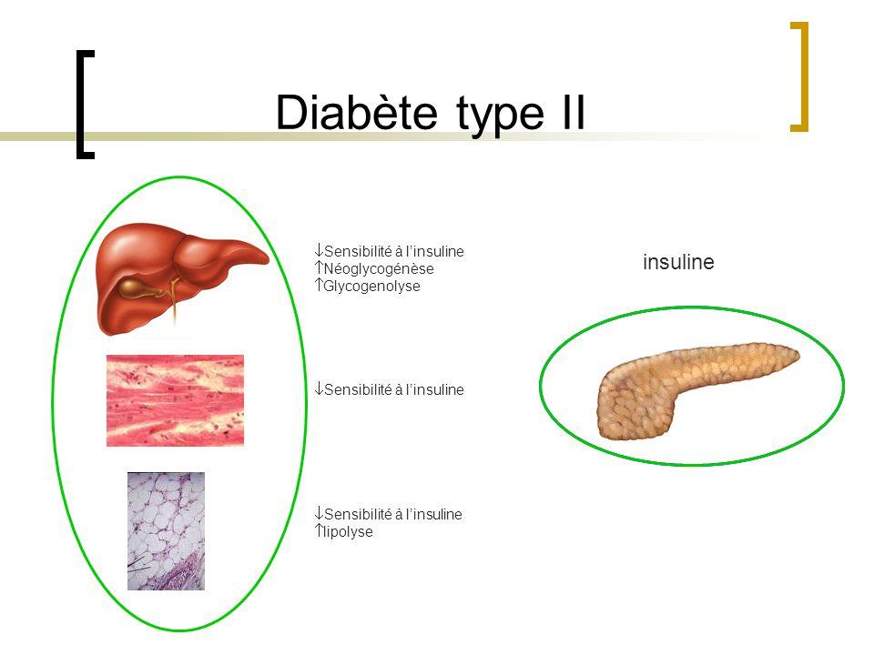 Diabète type II insuline Sensibilité à l'insuline Néoglycogénèse