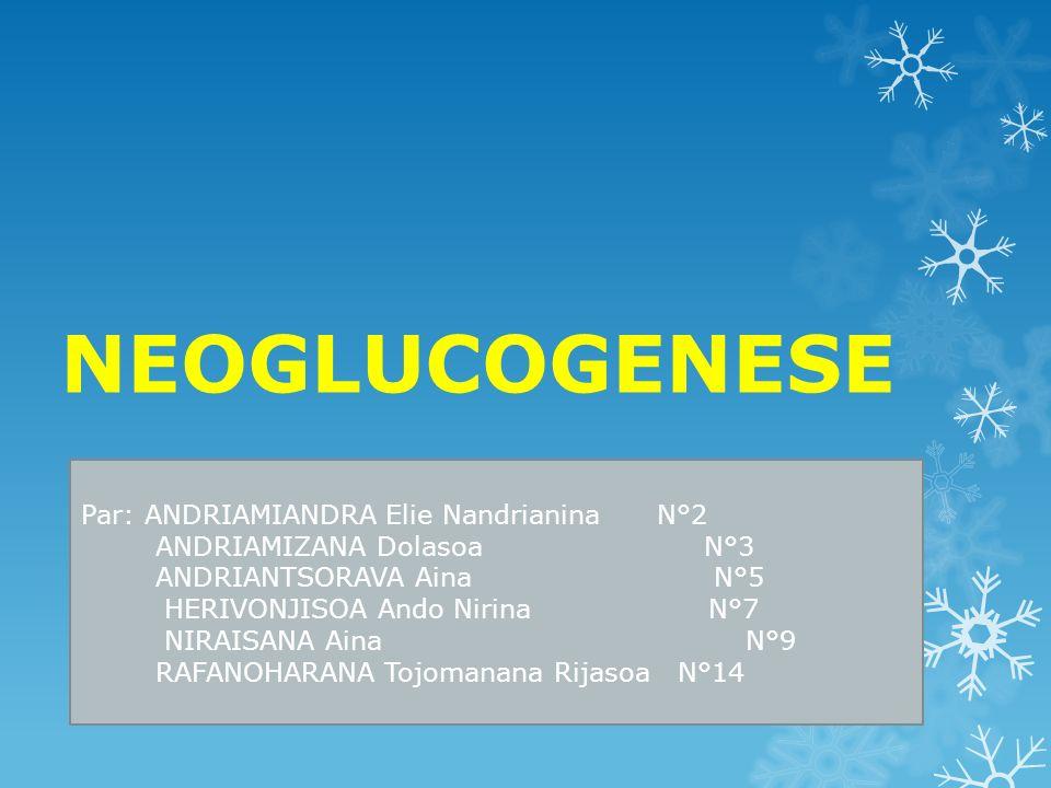 NEOGLUCOGENESE Par: ANDRIAMIANDRA Elie Nandrianina N°2