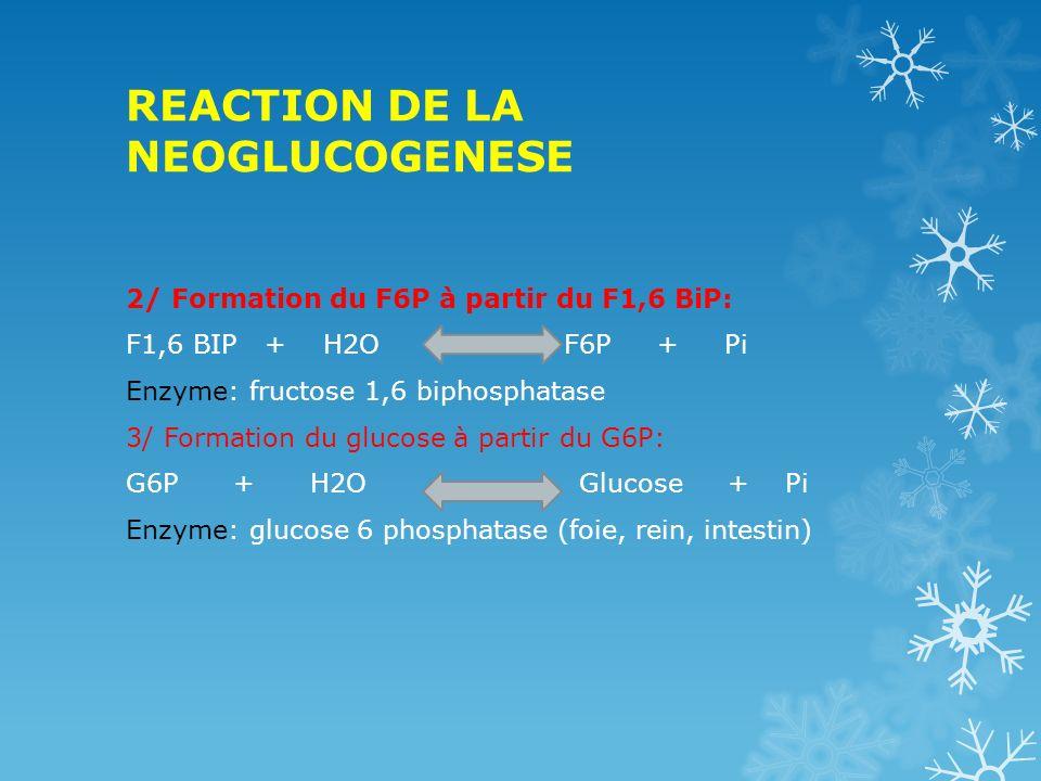 REACTION DE LA NEOGLUCOGENESE
