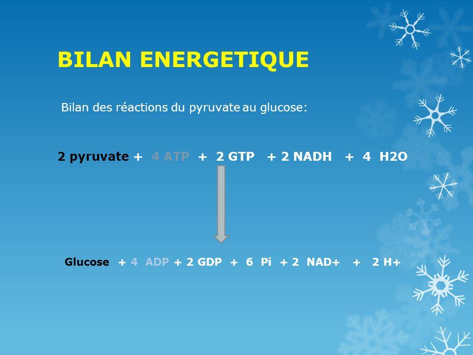 BILAN ENERGETIQUE 2 pyruvate + 4 ATP + 2 GTP + 2 NADH + 4 H2O