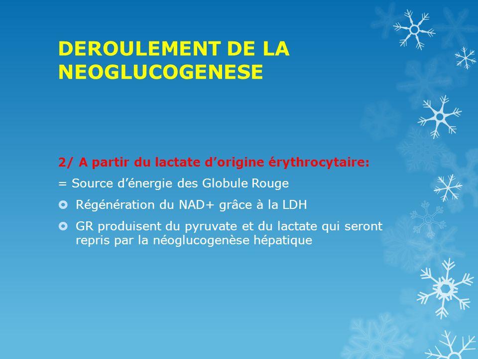 DEROULEMENT DE LA NEOGLUCOGENESE