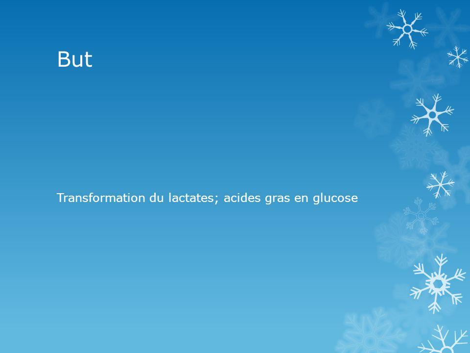 But Transformation du lactates; acides gras en glucose