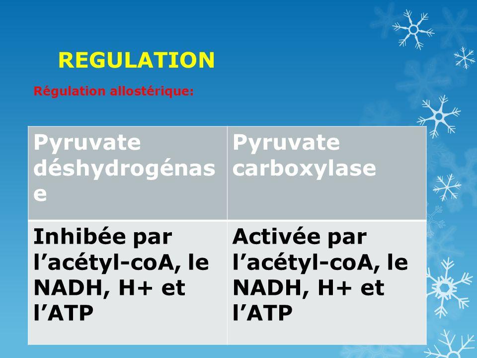Pyruvate déshydrogénase Pyruvate carboxylase