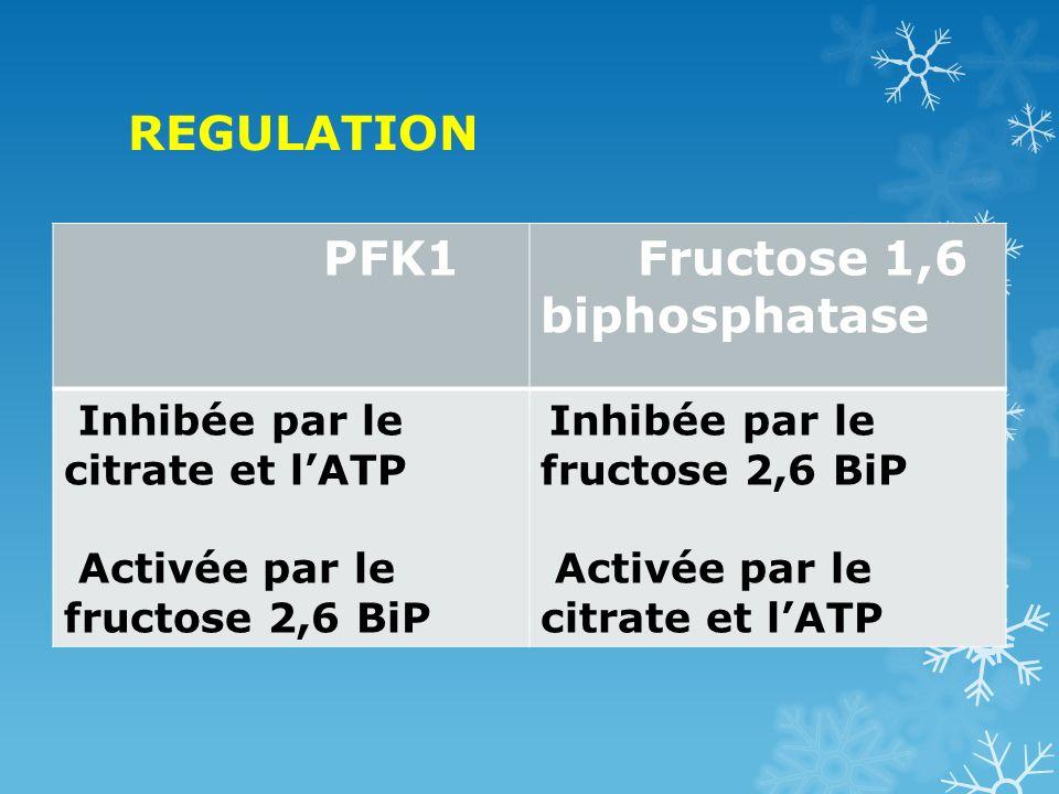 Fructose 1,6 biphosphatase