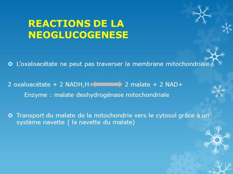 REACTIONS DE LA NEOGLUCOGENESE