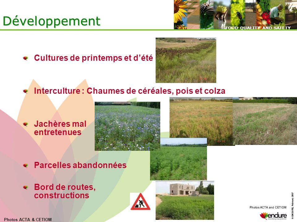 Développement Cultures de printemps et d'été