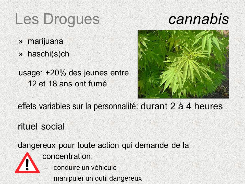 Les Drogues cannabismarijuana. haschi(s)ch. usage: +20% des jeunes entre 12 et 18 ans ont fumé.