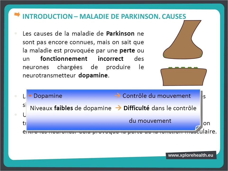 INTRODUCTION – MALADIE DE PARKINSON, CAUSES
