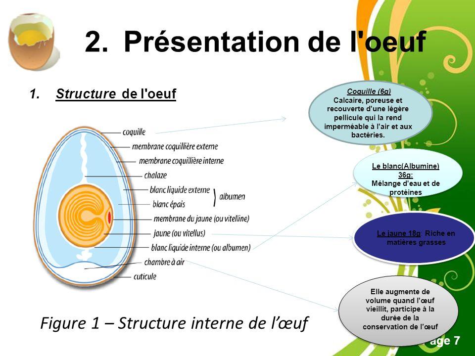 Présentation de l oeuf Figure 1 – Structure interne de l'œuf
