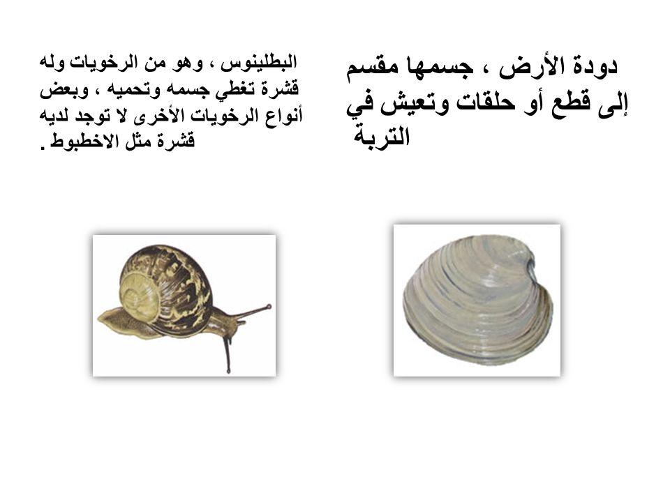 دودة الأرض ، جسمها مقسم إلى قطع أو حلقات وتعيش في التربة