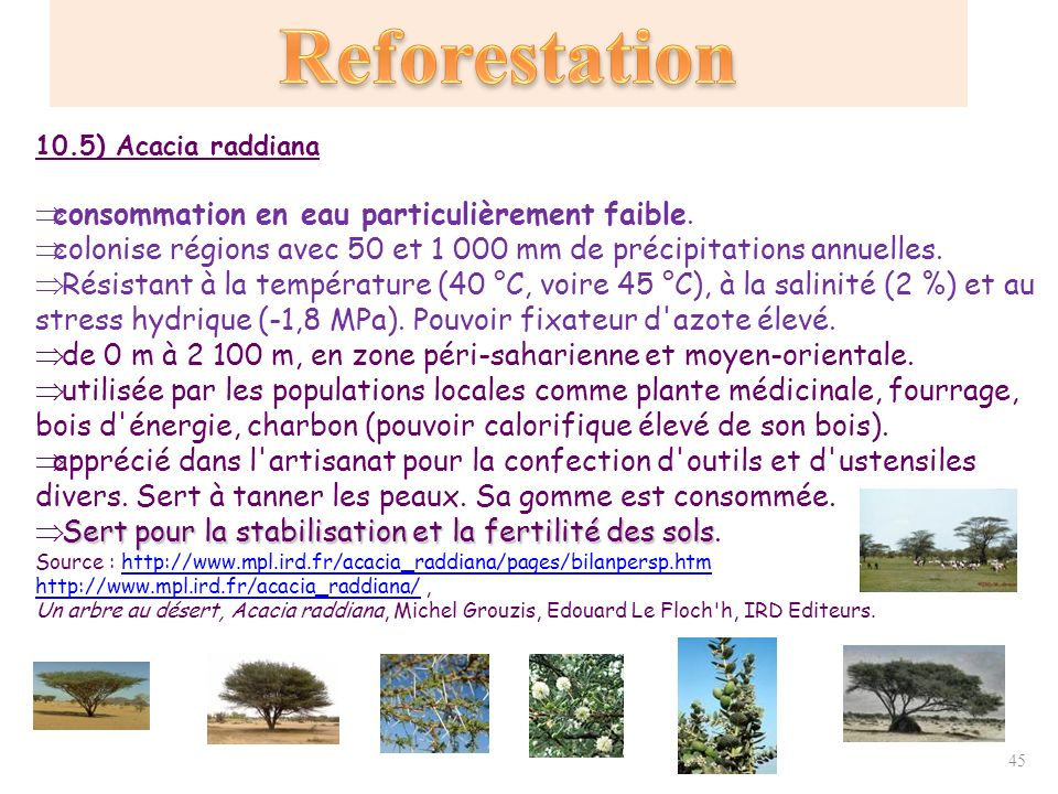 D forestations reforestations protection des for ts ppt t l charger - Plante a la gomme ...