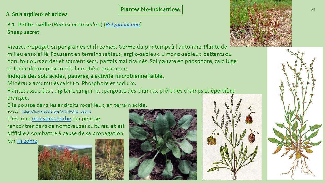 plantes bio indicatrices de france ppt t l charger. Black Bedroom Furniture Sets. Home Design Ideas