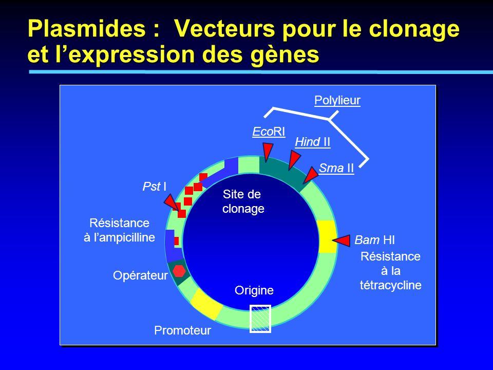 Plasmides : Vecteurs pour le clonage et l'expression des gènes