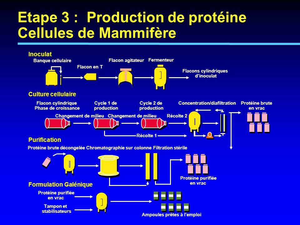 Etape 3 : Production de protéine Cellules de Mammifère