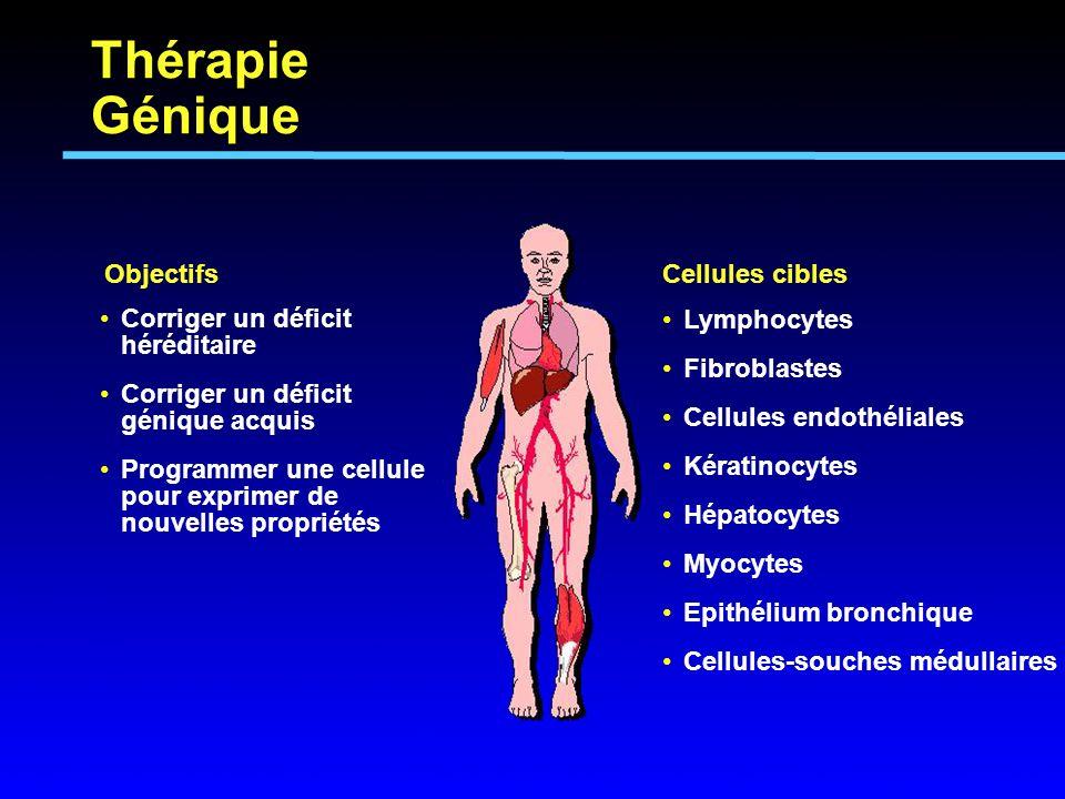 Thérapie Génique Objectifs Lymphocytes Fibroblastes