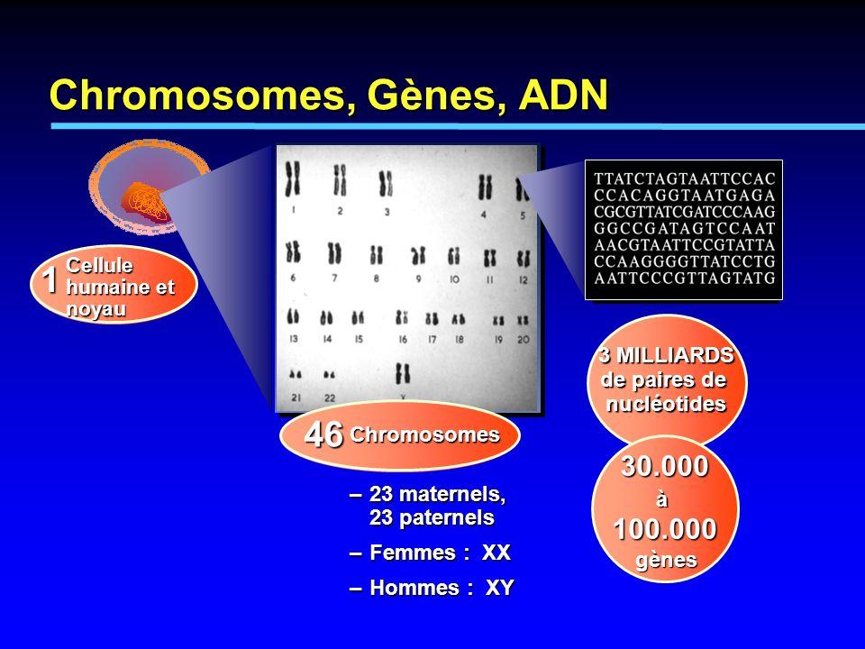 3 MILLIARDS de paires de nucléotides