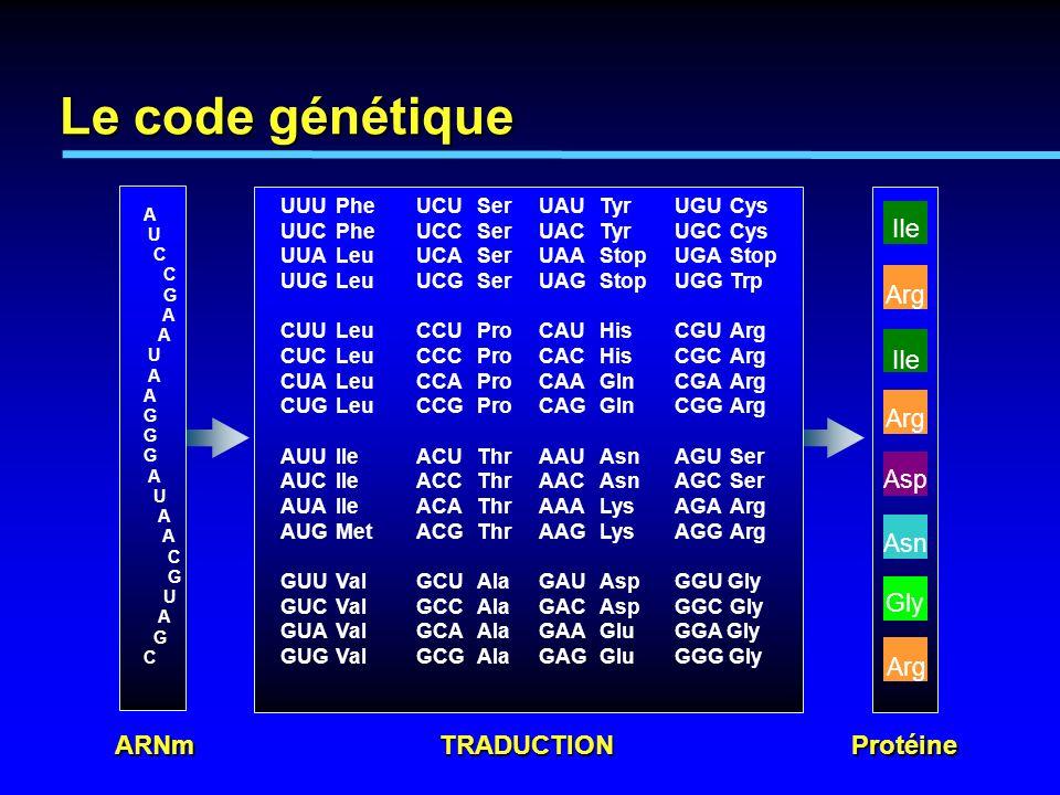 Le code génétique ARNm TRADUCTION Protéine IIe Arg IIe Arg Asp Asn Gly