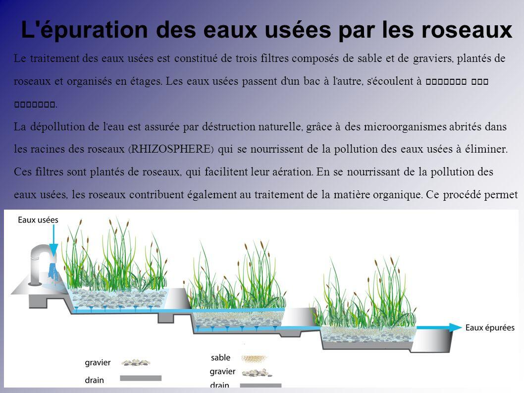 L 39 tat de l 39 eau dans la nature deux atomes d 39 hydrog ne ppt t l - Depollution par les plantes ...