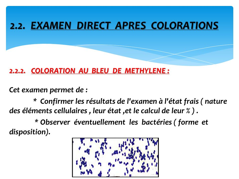 2.2. EXAMEN DIRECT APRES COLORATIONS