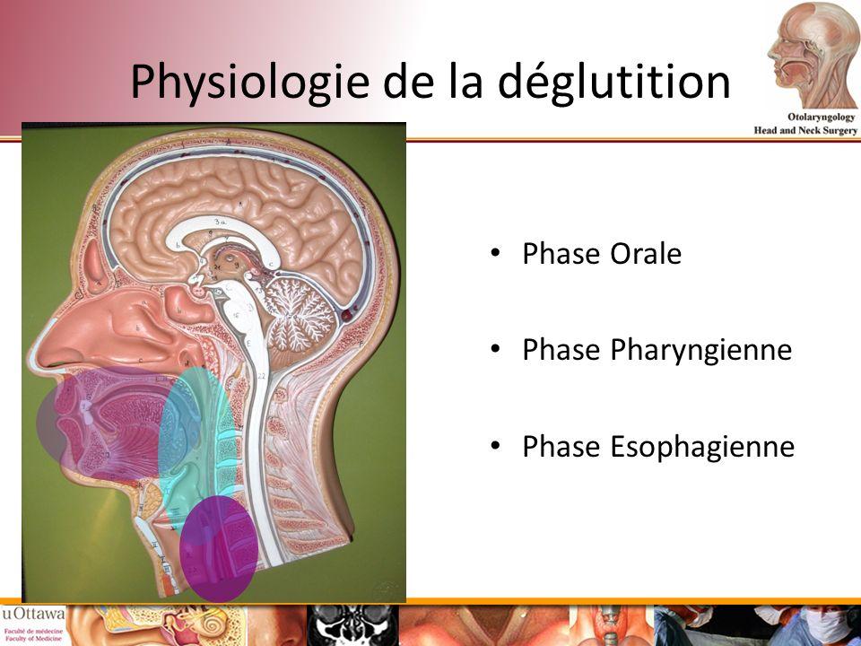 Beste Neurologie Anatomie Und Physiologie Zeitgenössisch - Anatomie ...