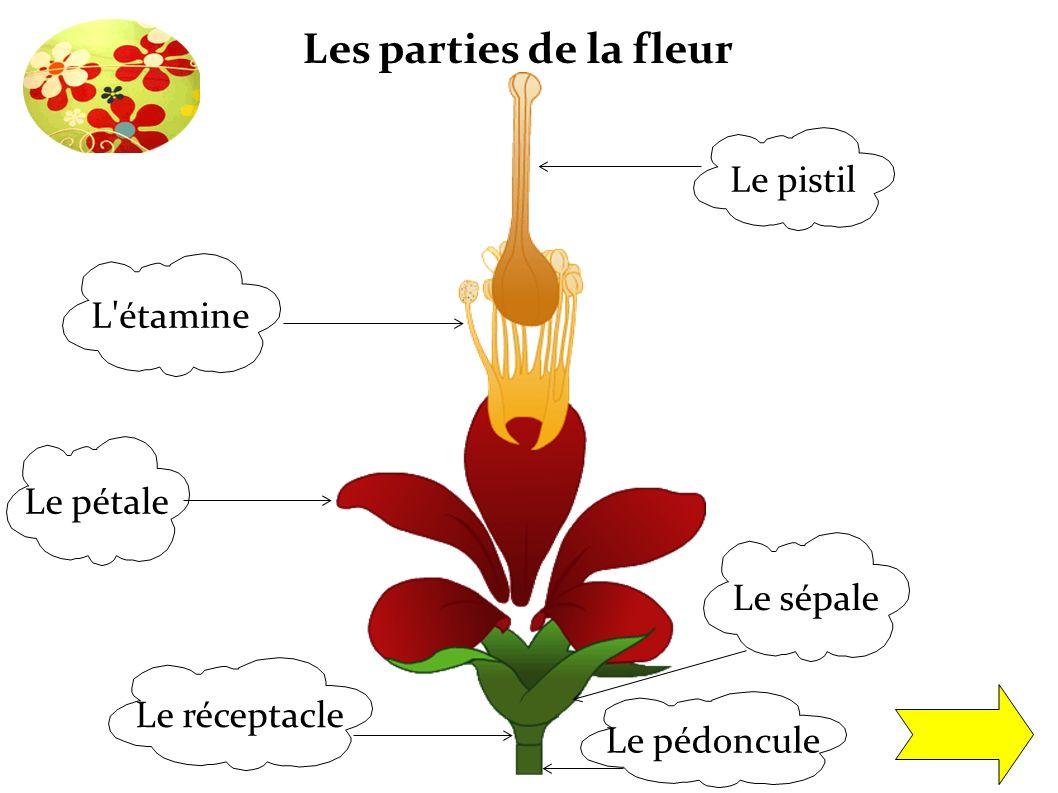 Glossaire pistil ensemble des parties femelles de la fleur ppt t l charger - Un ou une petale ...