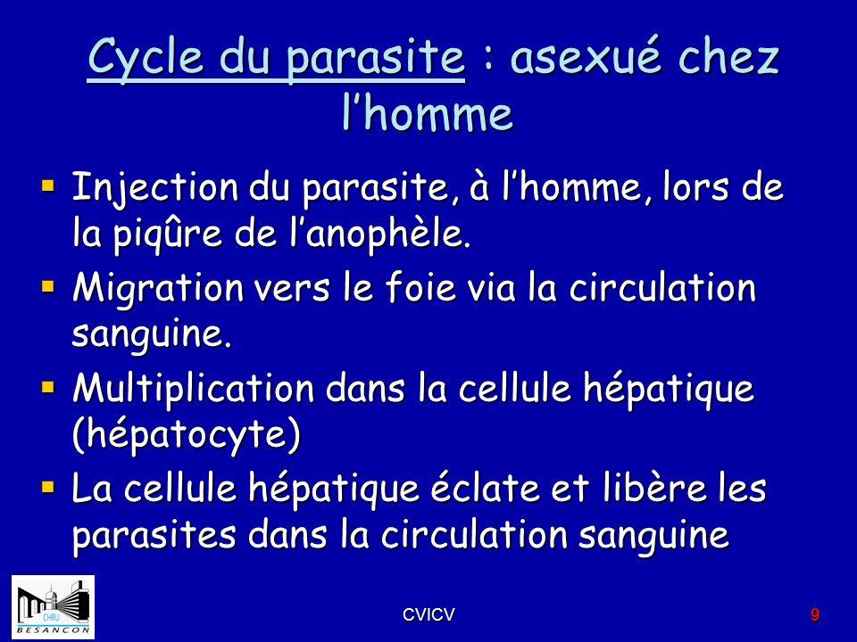 Cycle du parasite : asexué chez l'homme