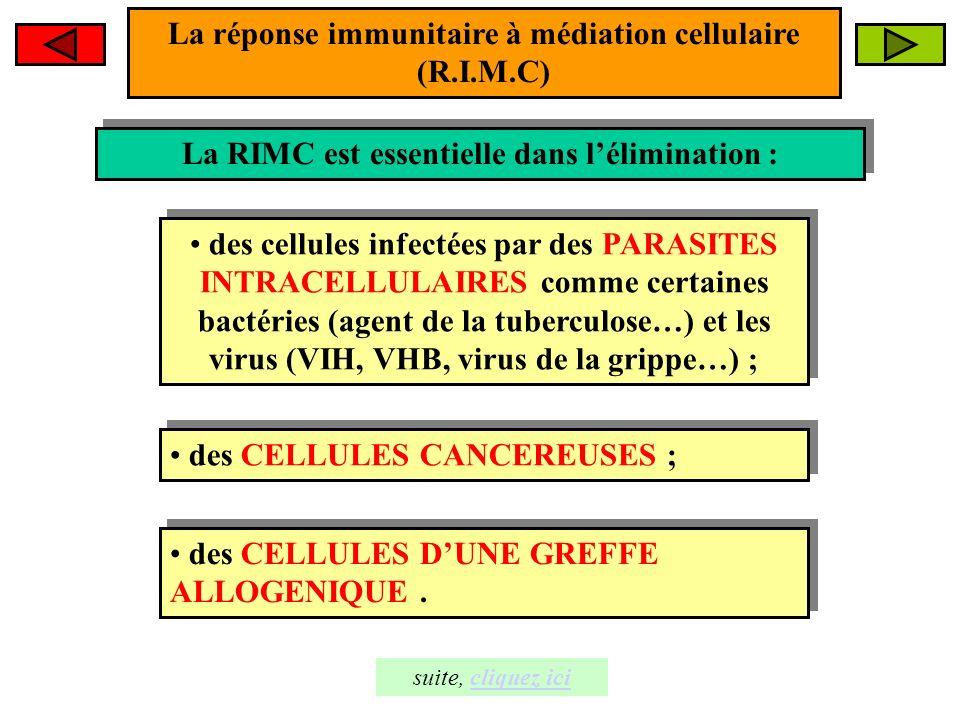 La réponse immunitaire à médiation cellulaire (R.I.M.C)