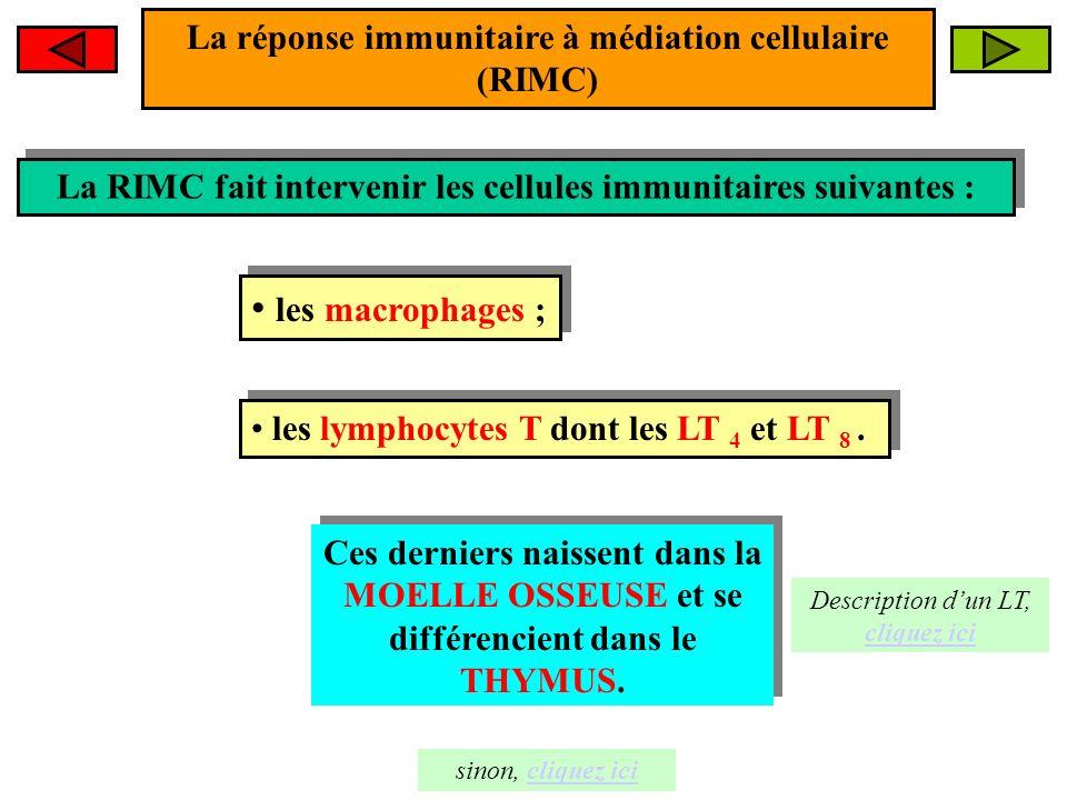 les macrophages ; La réponse immunitaire à médiation cellulaire (RIMC)