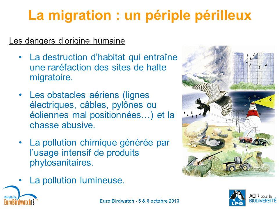 La migration : un périple périlleux