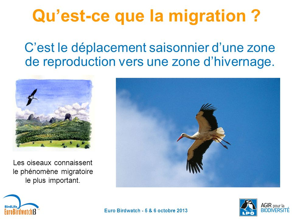 Qu'est-ce que la migration