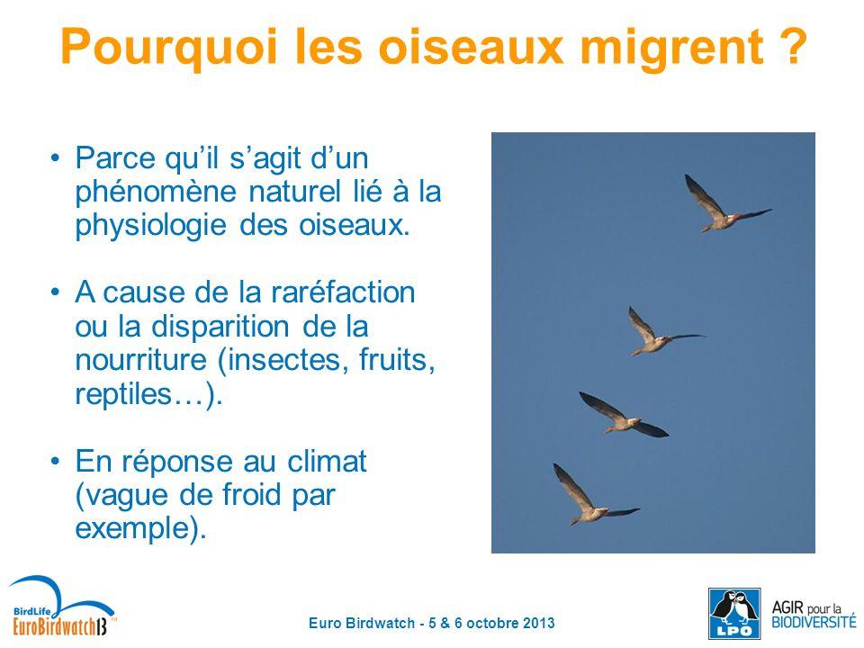Pourquoi les oiseaux migrent