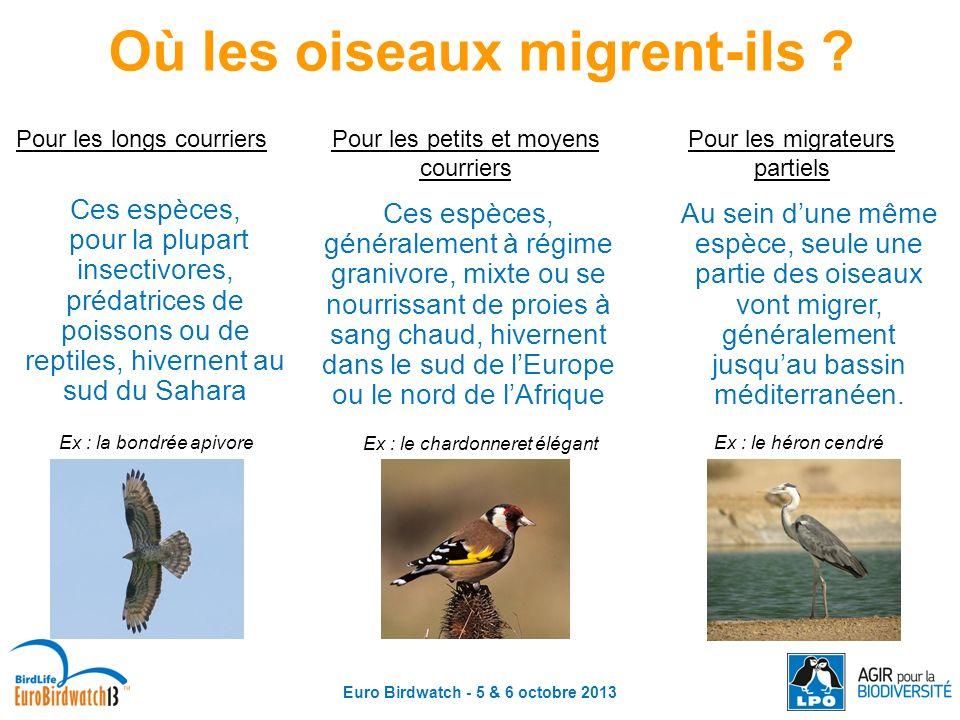 Où les oiseaux migrent-ils Euro Birdwatch - 5 & 6 octobre 2013