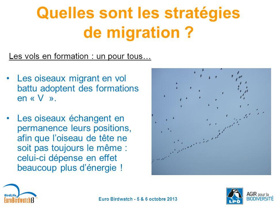 Quelles sont les stratégies de migration