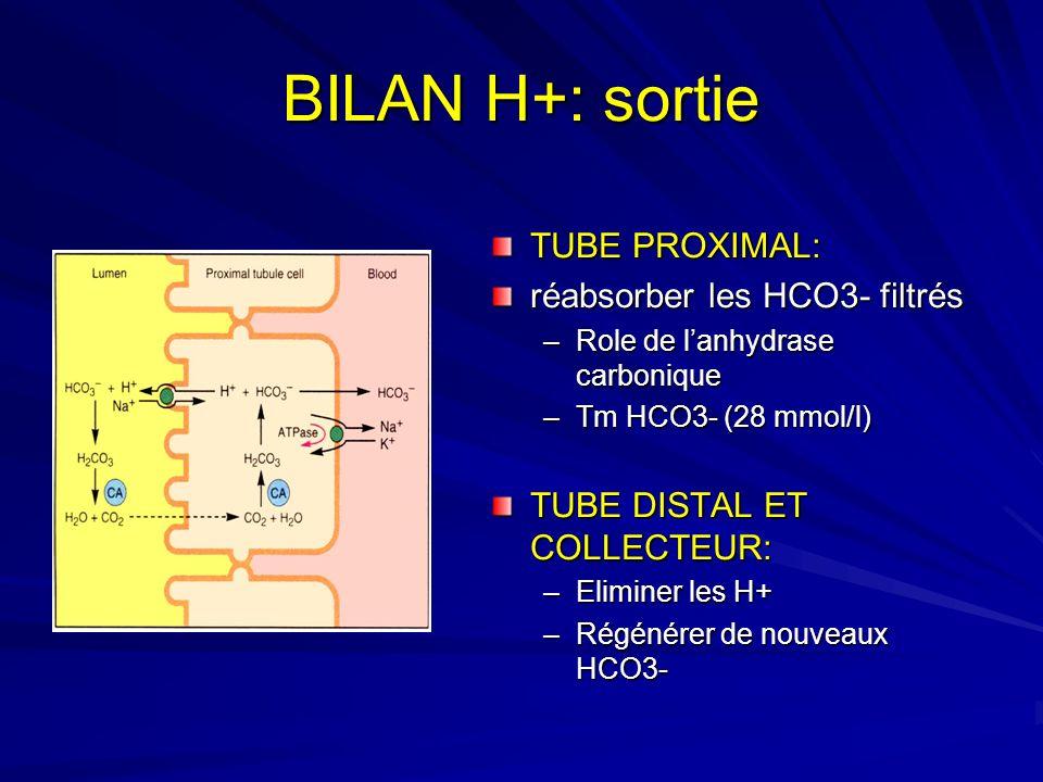 BILAN H+: sortie TUBE PROXIMAL: réabsorber les HCO3- filtrés