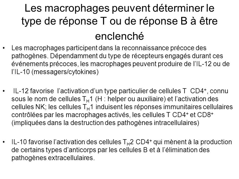 Les macrophages peuvent déterminer le type de réponse T ou de réponse B à être enclenché