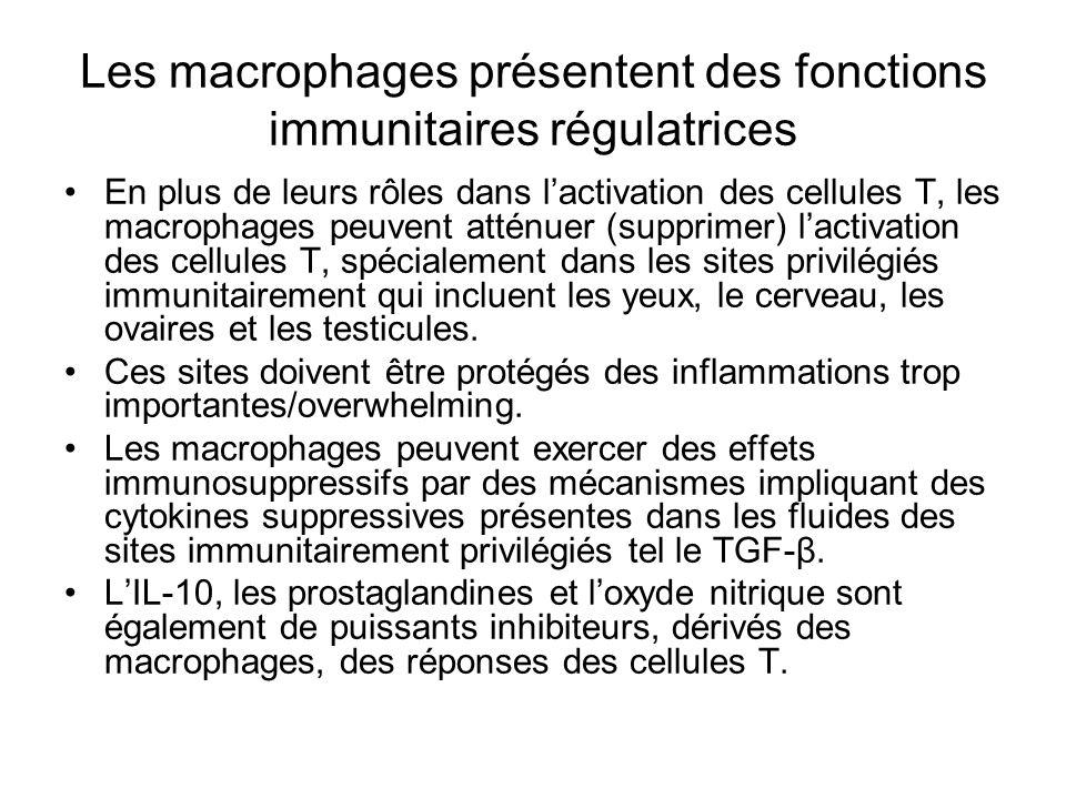 Les macrophages présentent des fonctions immunitaires régulatrices