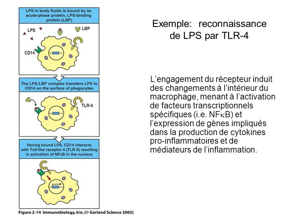 Exemple: reconnaissance de LPS par TLR-4