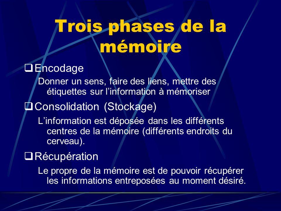 Trois phases de la mémoire
