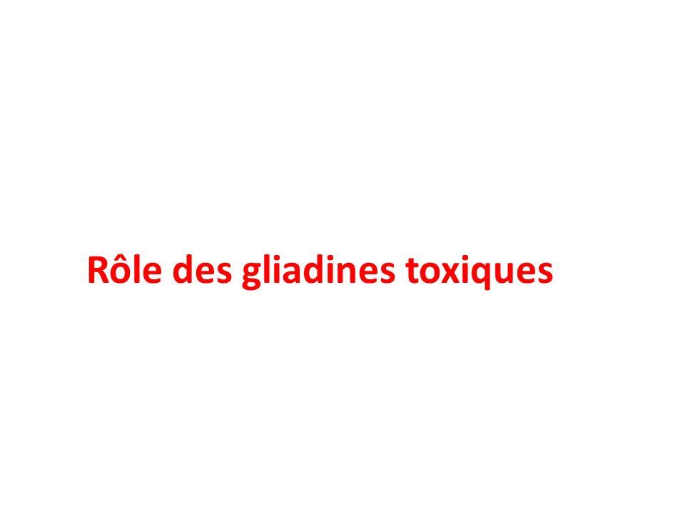 Rôle des gliadines toxiques